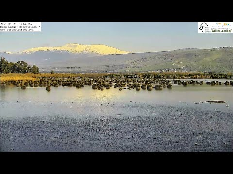 Cam 2 Hula Nature Reserve|Israel Nature \u0026 Parks Authority|The Charter Group Of Wildlife Ecology