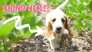 Found Missing *Puppy* In Fields (Happy Ending!)