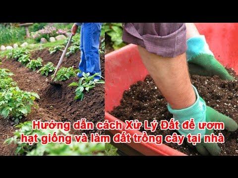 Hướng dẫn cách Xử Lý Đất để ươm hạt giống và làm đất Trồng Rau tại nhà