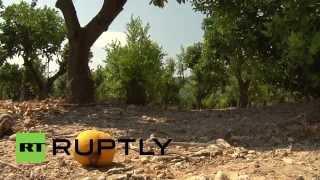 Spain: Orange farm to witness rotten effects of sanctions