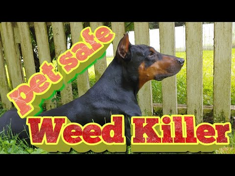 Pet Safe Weed Killer - How to use Vinegar to control weeds