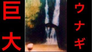 【衝撃】【閲覧注意】南アフリカで発見された超巨大ウナギ「インカニヤンバ」の驚愕画像。その生態とは・・・