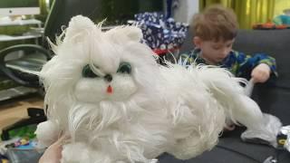 Кот путешественник прилетел в посылке из Латвии в Австралию!