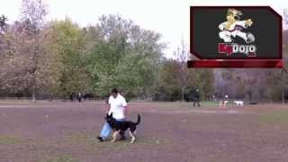This Video Previously Contained A Copyrighted Audio Track. Due To A Claim By A Copyright Holder, The Audio Track Has Been Muted.     German Shepherd Advanced Obedience Dog Training Demo