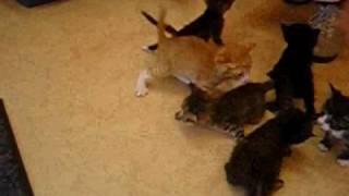 何者かに捨てられた9匹のチビチビ子猫