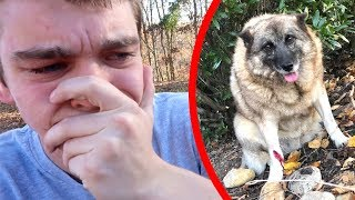 my dog is dying...