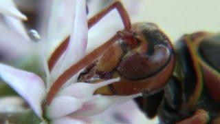 10月、交尾を終えた女王蜂は、自分の母が越冬した同じ場所で冬眠しま...