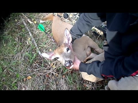 Deer Head Shot with Crossbow at 20 Yards (GRAPHIC CONTENT!)