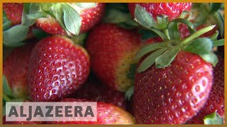 🇦🇺 Australia cracks down after needles found in strawberries | Al Jazeera English