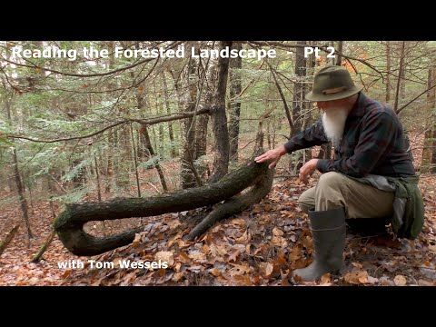 reading the forested landscape a natural history of new england