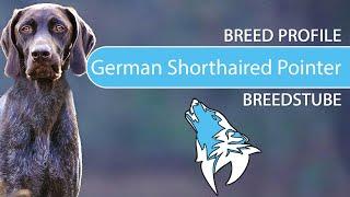 German Shorthaired Pointer Breed, Temperament & Training