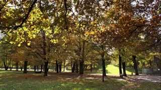 Der Hirschgarten in München im Herbst
