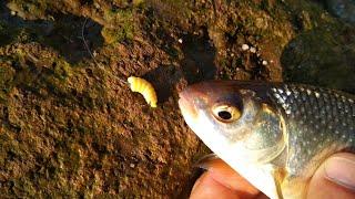 Как там с рыбалкой на арочном мосту в Запорожье 1 мая тарань на ультралайт Рыболовные заметки
