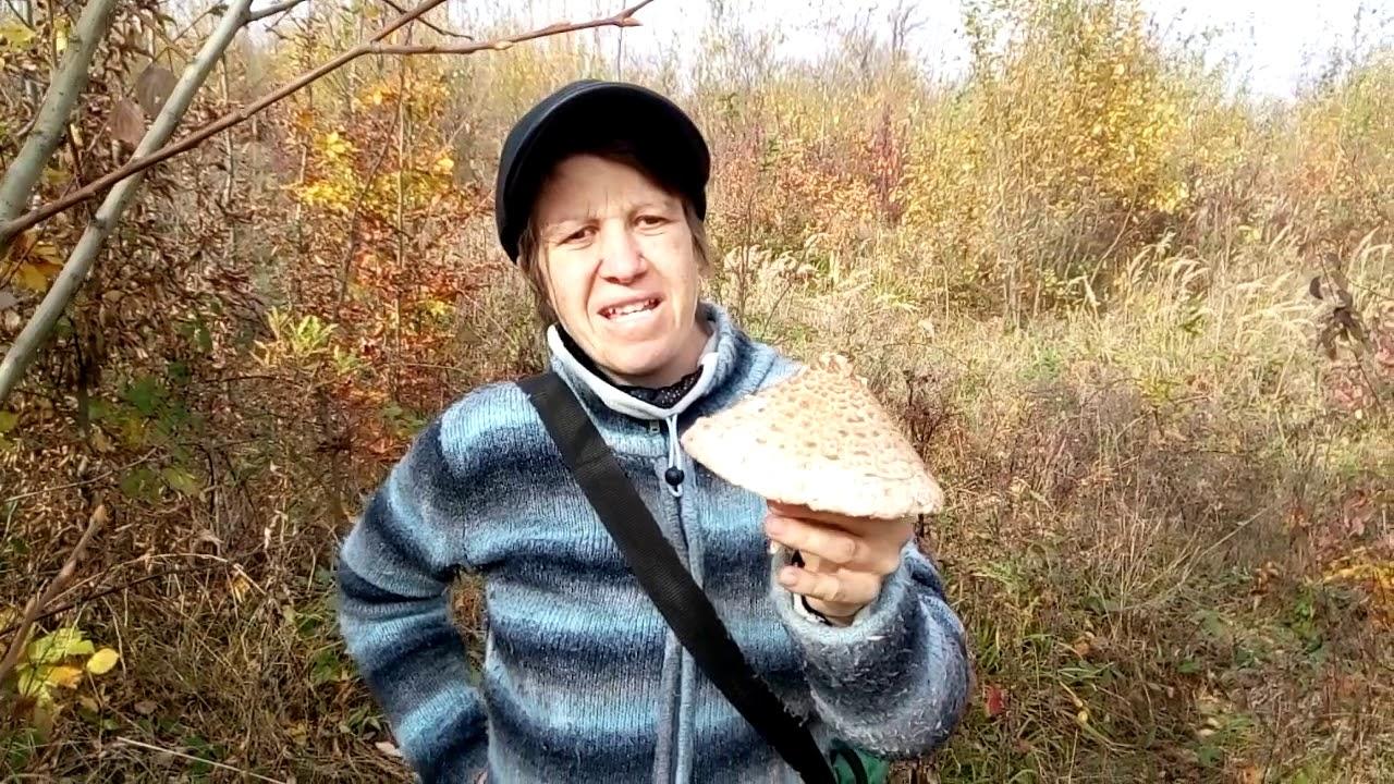 ciuperci piciorul caprioarei - Am o nelamurire - ciuperca.realitateasatelor.ro Forum