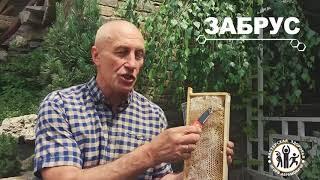 что такое пчелиный забрус и почему он считается таким полезным?