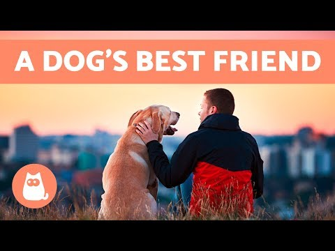 Are You Your Dogs Favorite Person?  10 Signs