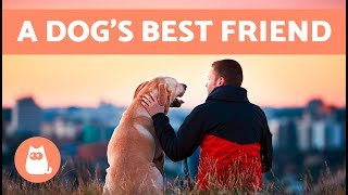 Are You Your Dog's Favorite Person? ❤ 10 Signs