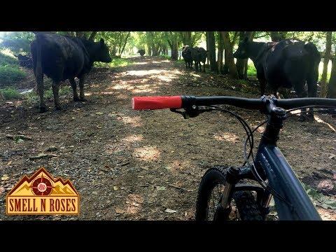 Biking Chessie Nature Trail: Buena Vista To Lexington, Virginia