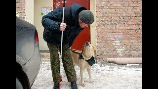 В Омске живет пёс-поводырь Цукат