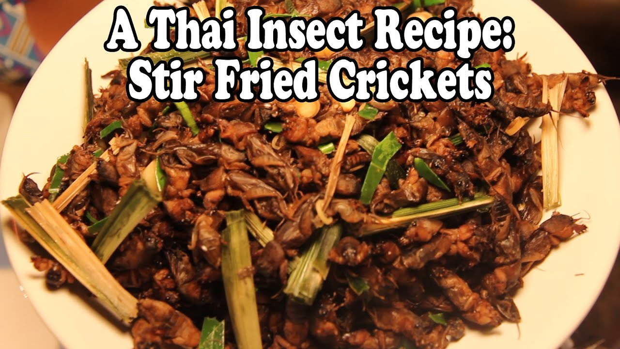 How to cook crickets and grasshoppers