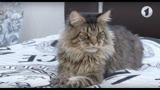 1 марта - День кошек / Доброе утро, Приднестровье!