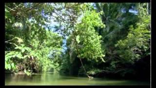 Красивая природа (клип релакс, музыка Andru Donalds - Dreamer)