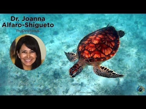 ProDelphinus (Sea Turtles) · Dr. Joanna Alfaro-Shigueto · Expo 2014