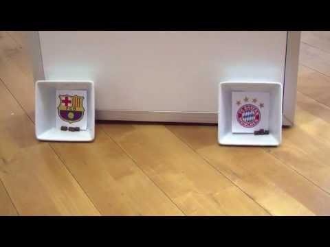FC Bayern vs. FC Barcelona - Champions League Halbfinale