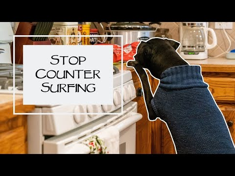 How To Stop Counter Surfing - You Ask We Answer