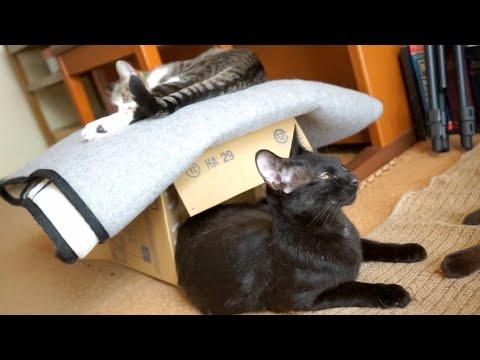 ぐらっときた猫