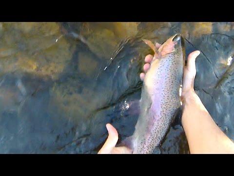 Truckee River - Early November