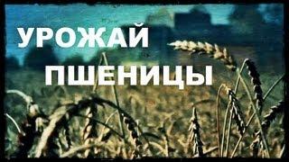 Галилео. Урожай пшеницы