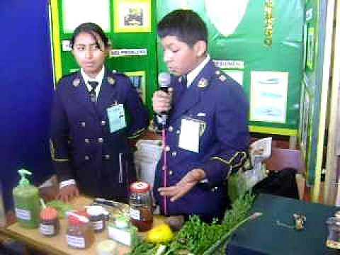 Feria De Ciencias 2010 Plantas Medicinales Youtube