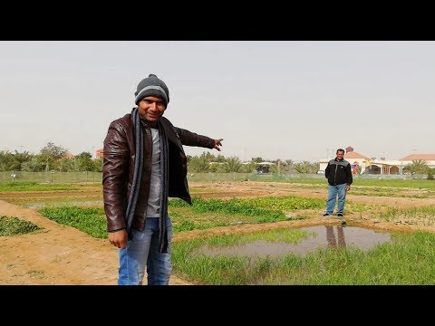 #INDIAN FARMERS IN #SAUDIARABIA [HINDI] KHAJUR KA BAGICHA | DAILY SHAEER VLOG