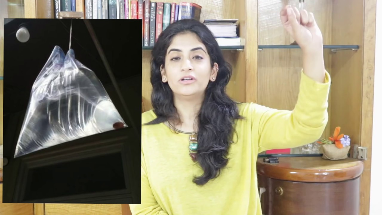 Download The Simplest Way to Get Rid of House Flies During Rains   Amazing Life Hack