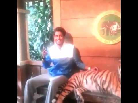 Парень испугался тигра