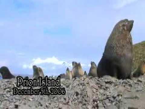 Destination Unknown South Georgia, episode 4 Prion Island