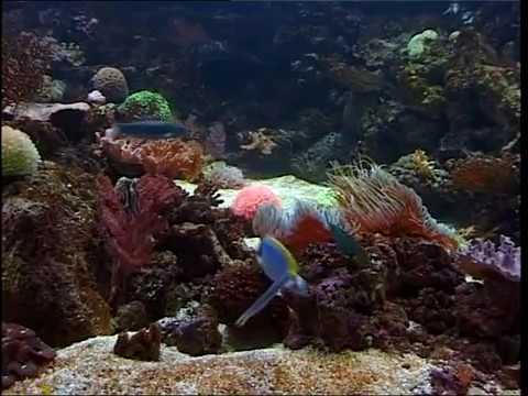 musique relaxation aquarium