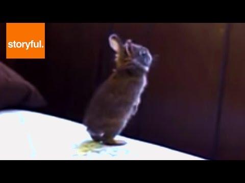 Baby Bunny Fails Window Jump