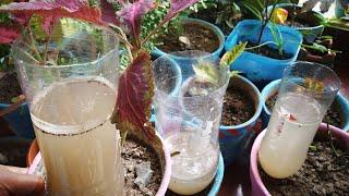घर से बाहर जा रहे है तो पौधो के पानी की चिन्ता खत्म ..ये करे जुगाड😊 Self watering system for plants