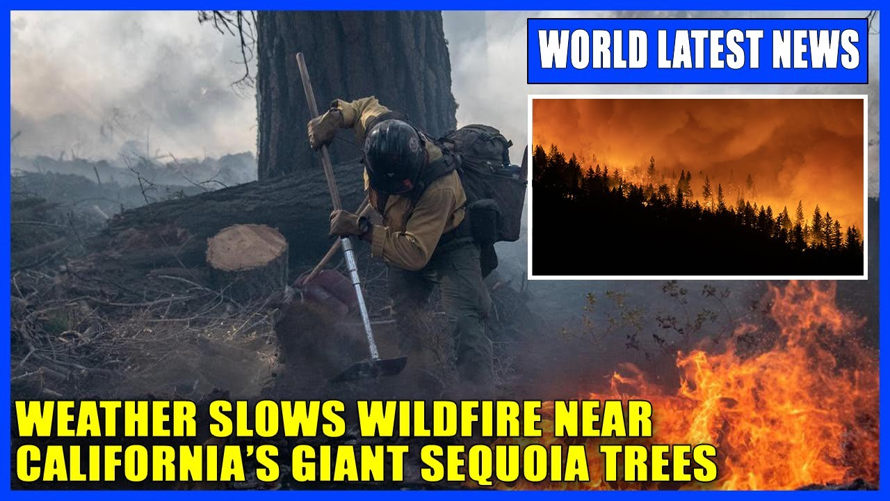 KNP Complex fire spares General Sherman sequoia for now