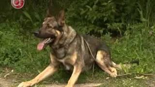 Чемпионат России по собаководству
