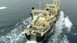 Япония: идет охота на китов