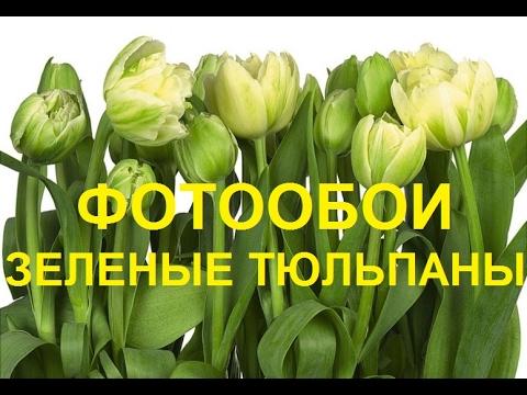Фотообои тюльпаны зеленые