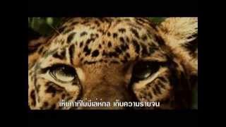 เสือ : ฮันนี่ ภัสสร บุณยเกียรติ