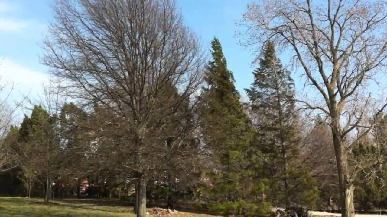 Coxhall Gardens in Carmel Indiana - YouTube