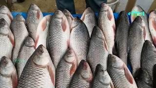 Amazing Cutting Fish | Rohu Fish Cutting | Catla Fish Cutting | Raw Fish Pieces
