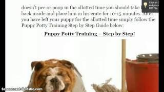 Puppy Potty Training in 3 Days!