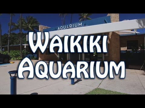 Waikiki Aquarium, Oahu Hawaii