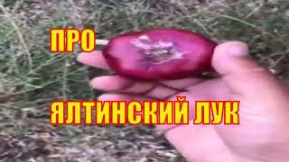 Ялтинский лук. Крым Ялта. Отдых в Крыму 2020